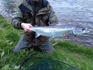 Mr David Cargill - North Esk